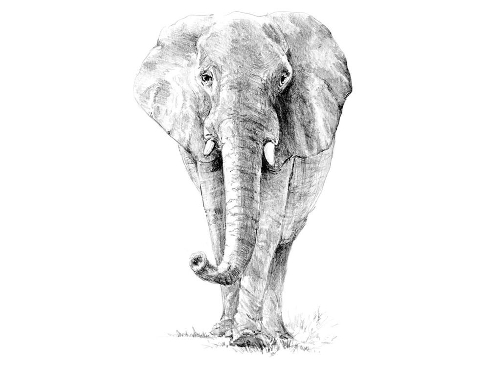 Набор для скетчинга «Слон»
