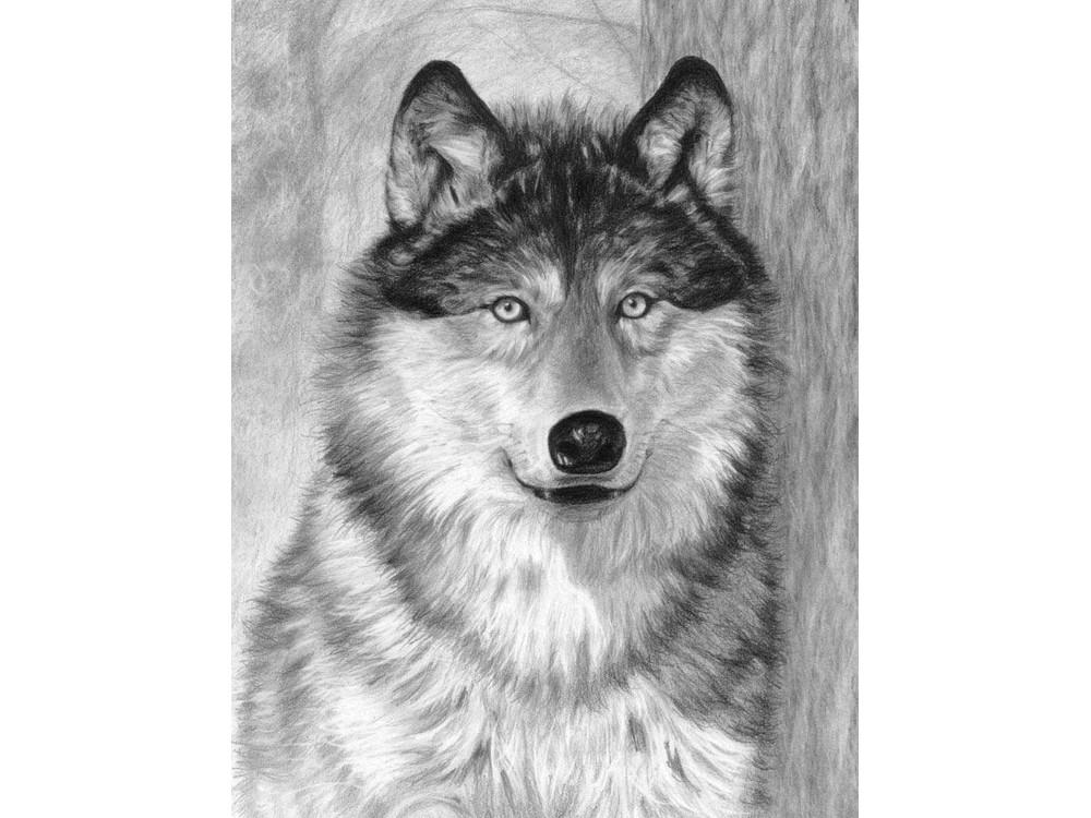 Набор для скетчинга «Волк»