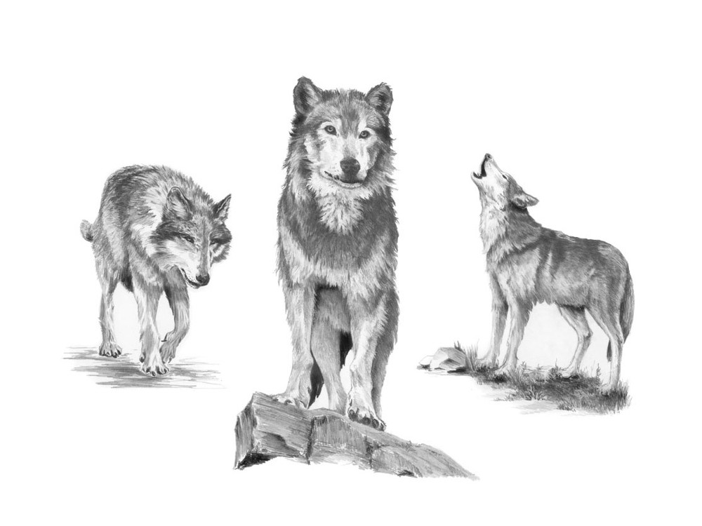 Набор для скетчинга «Волки»