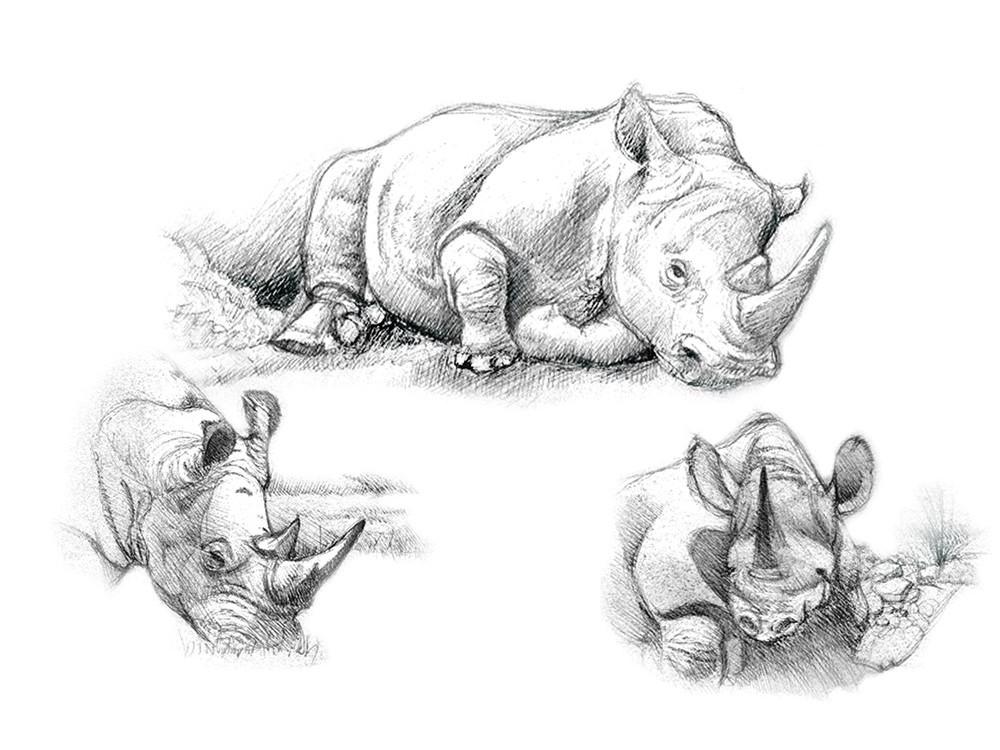 Набор для скетчинга «Носороги»