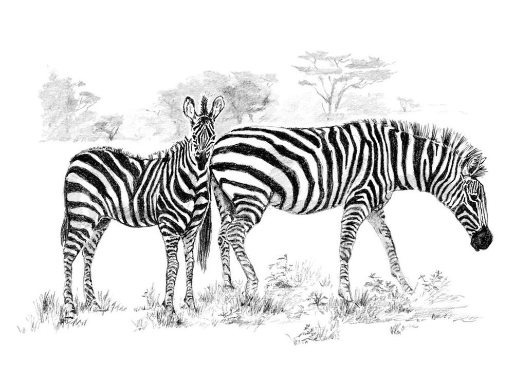 Набор для скетчинга «Зебры»