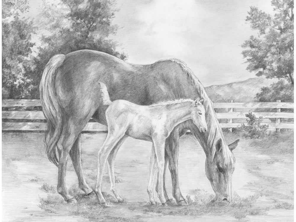 Набор для скетчинга «Лошади»