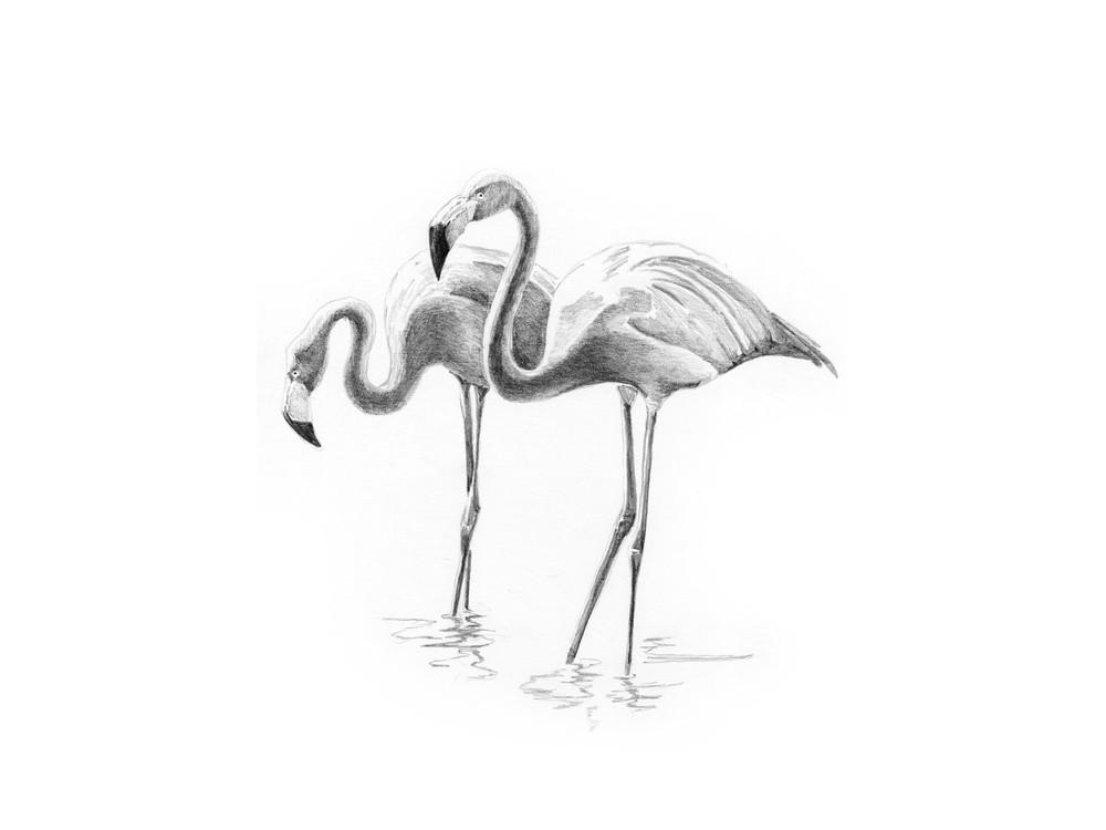 Набор для скетчинга «Фламинго»