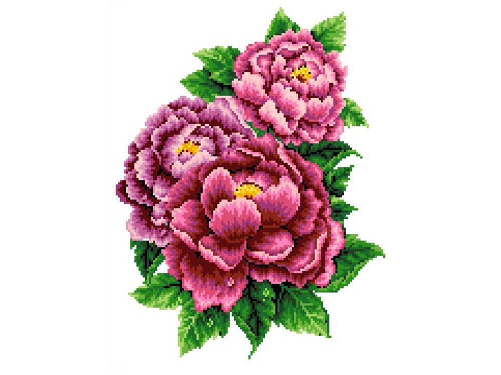 Купить Вышивка крестом, Набор для вышивания «Розовые пионы», Каролинка