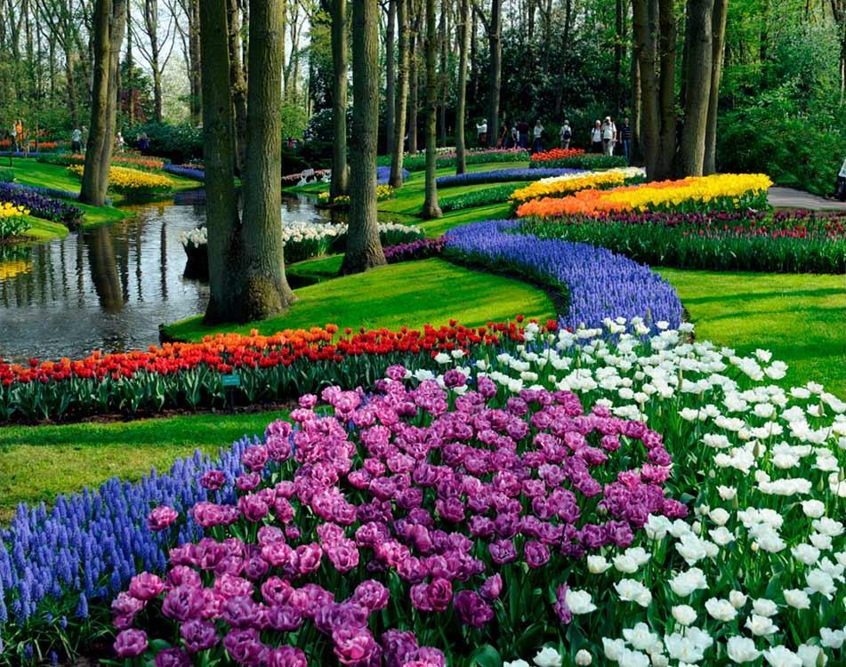 Купить Алмазная вышивка «Тюльпаны в парке», Яркие Грани, Россия
