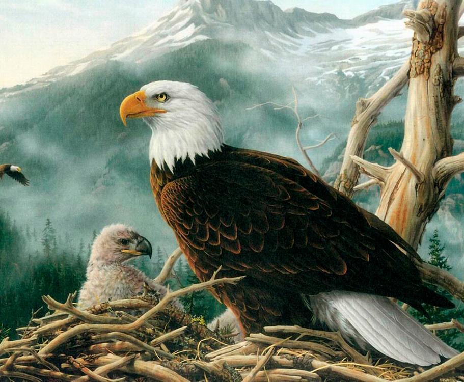 Алмазная вышивка «Орел и орленок в гнезде»