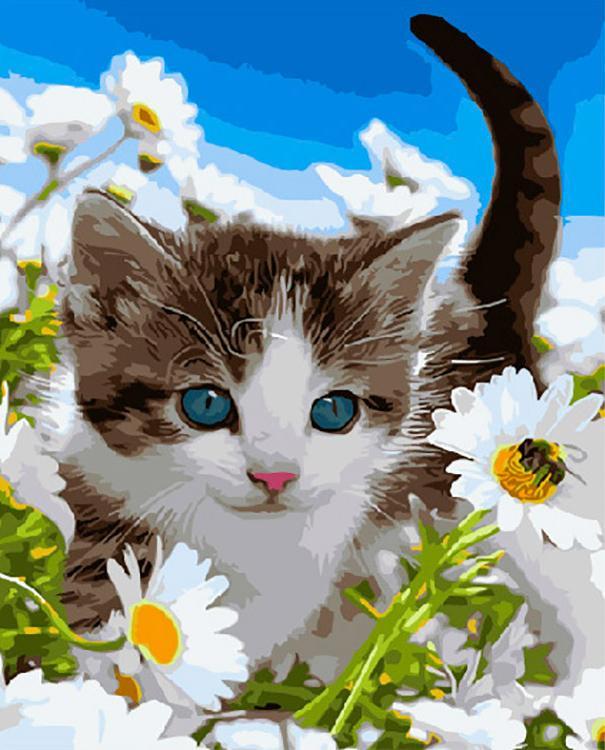 Картина по номерам «Котенок в ромашках»