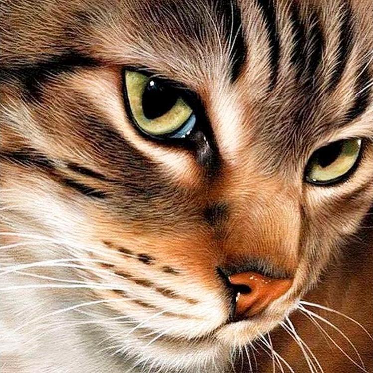 Купить Алмазная вышивка «Загадочный кот» Сары Стрибблинг, Гранни