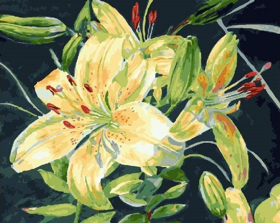 Купить Картина по номерам «Жёлтый цветок», Paintboy (Premium), RDG-1846