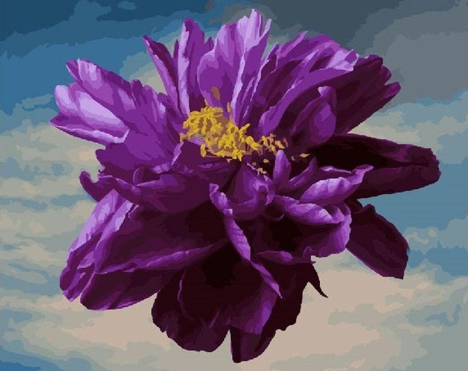 Купить Картина по номерам «Фиолетовый цветок», Paintboy (Premium), RDG-2848