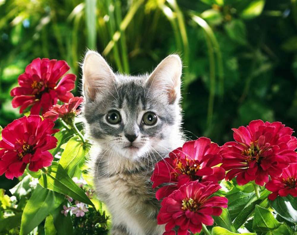 картинки котенок с цветами выясним степень