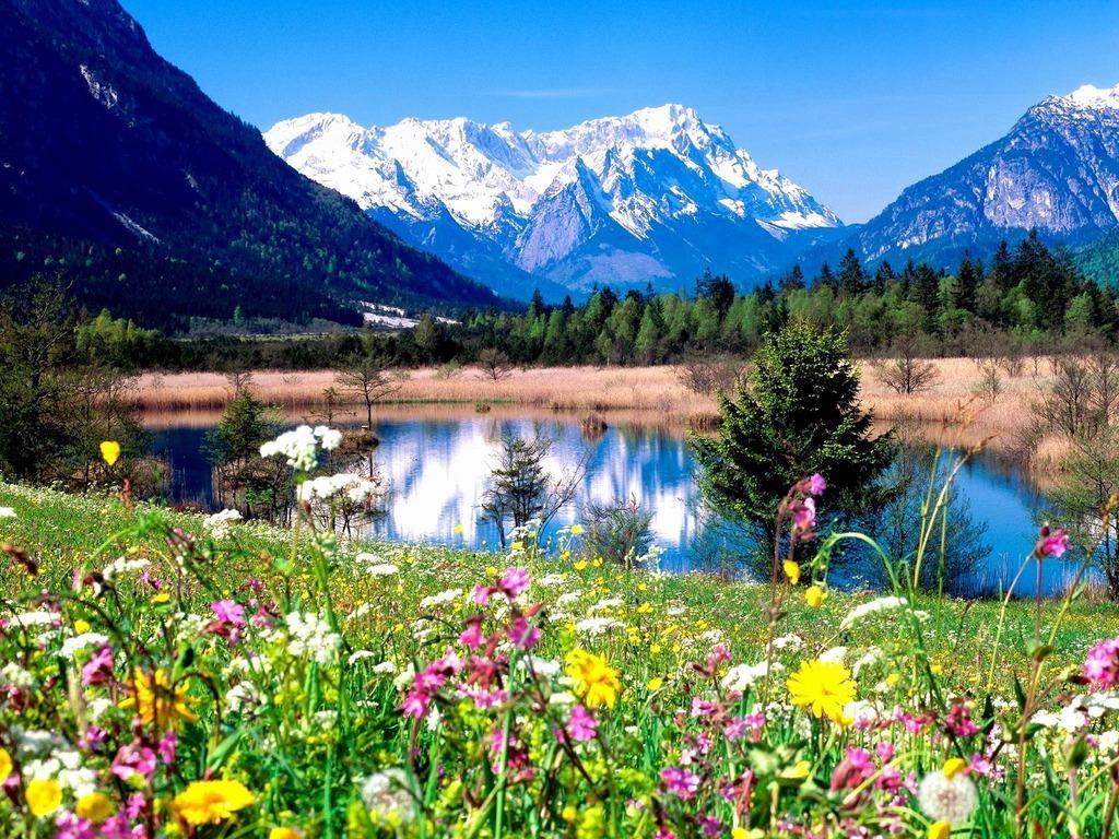 картинка красота весны окружающий мир