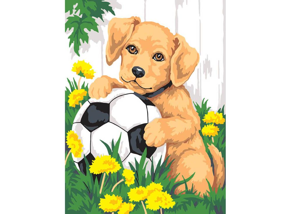 Кимры картинки, собачка с цветами картинки для детей