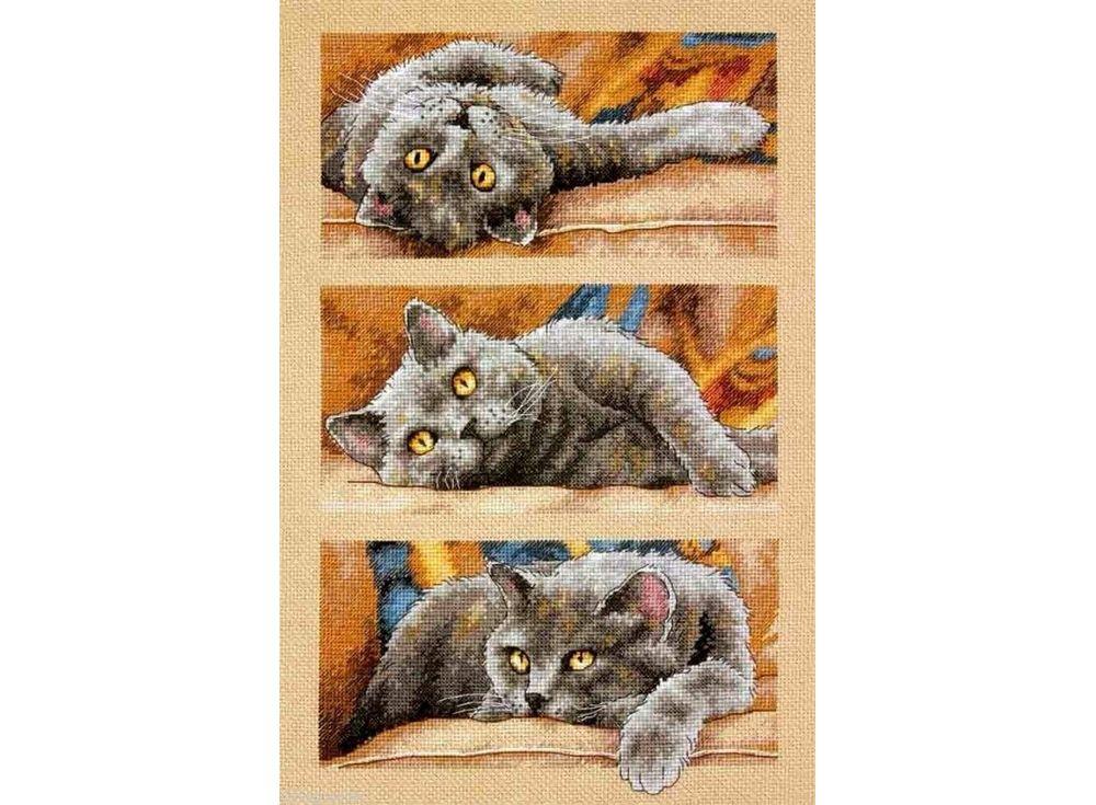 Купить Вышивка крестом, Набор для вышивания «Кот Макс», Dimensions, 25x38 см, DMS-70-35301