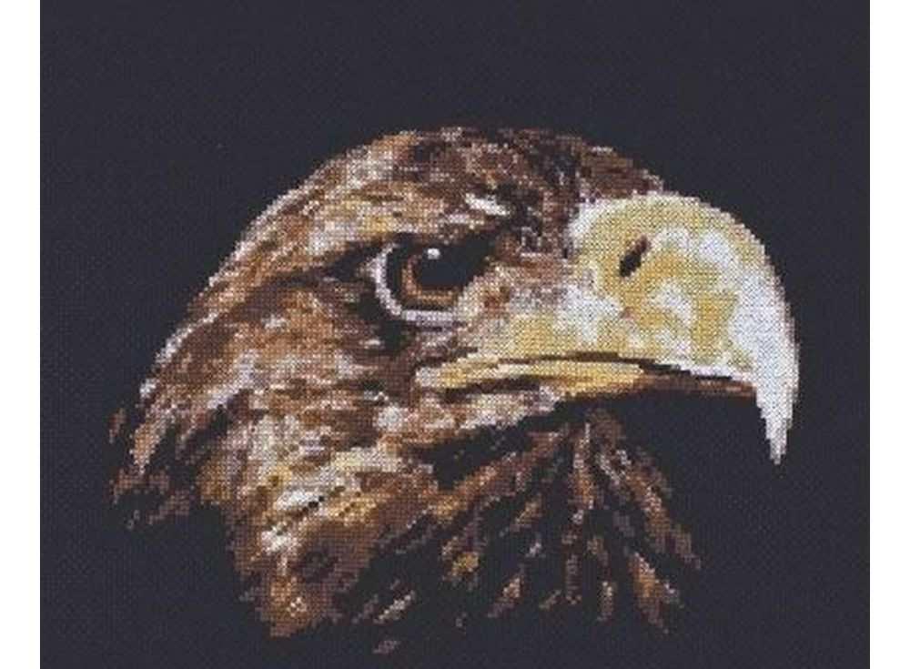 Купить Вышивка крестом, Набор для вышивания «Взгляд орла», Палитра, 26x22 см, 02.003