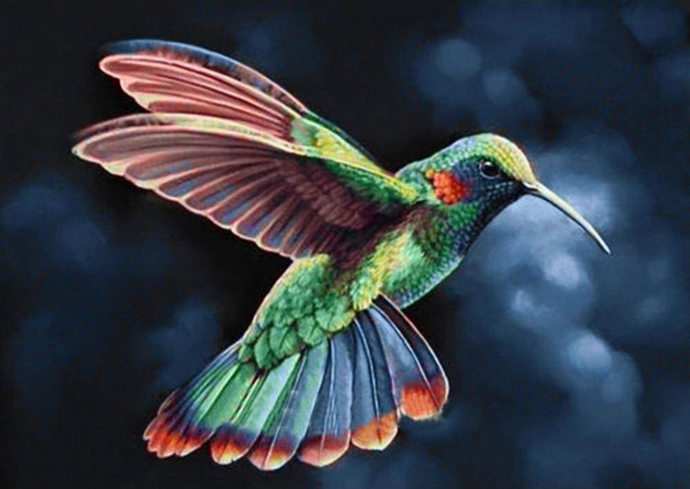 Картинка с колибри, для бассейна