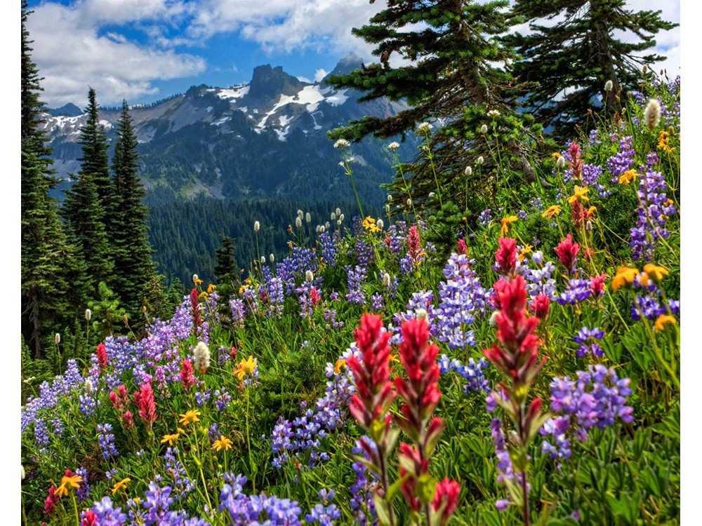 альпийский луг фото