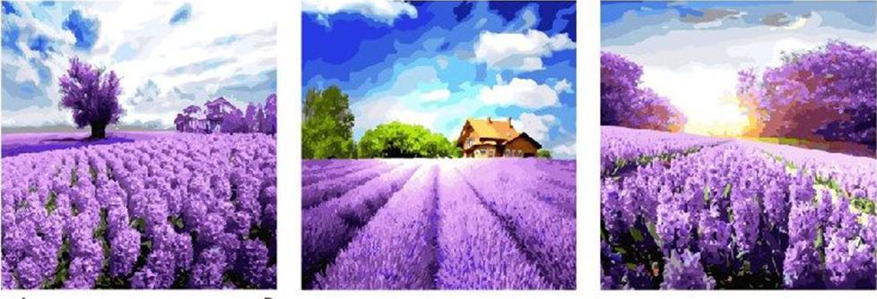Купить Картина по номерам «Лавандовые поля», Paintboy (Premium), Китай, 3 шт. 50x50 см, PX5167