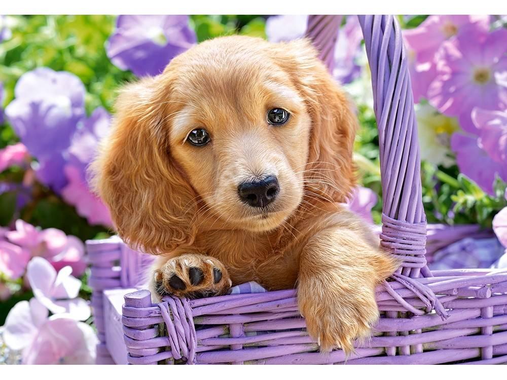 Картинки про собак милые