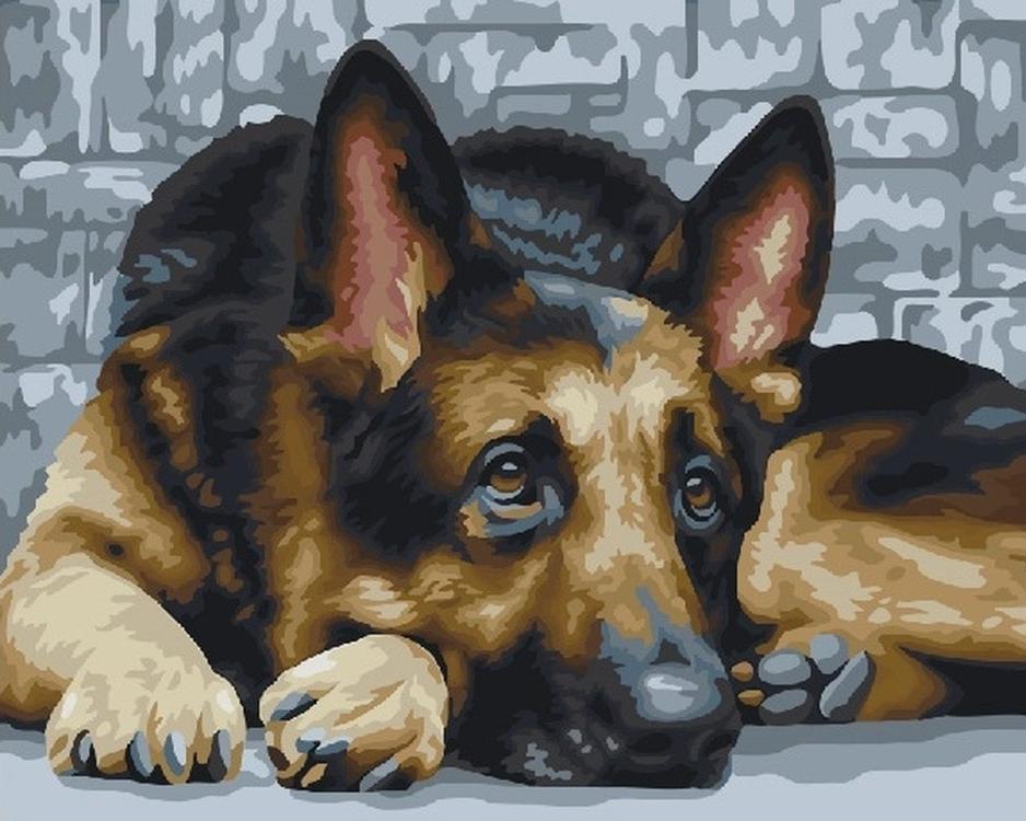 Купить Картина по номерам «Немецкая овчарка», Paintboy (Premium), Китай, GX22302