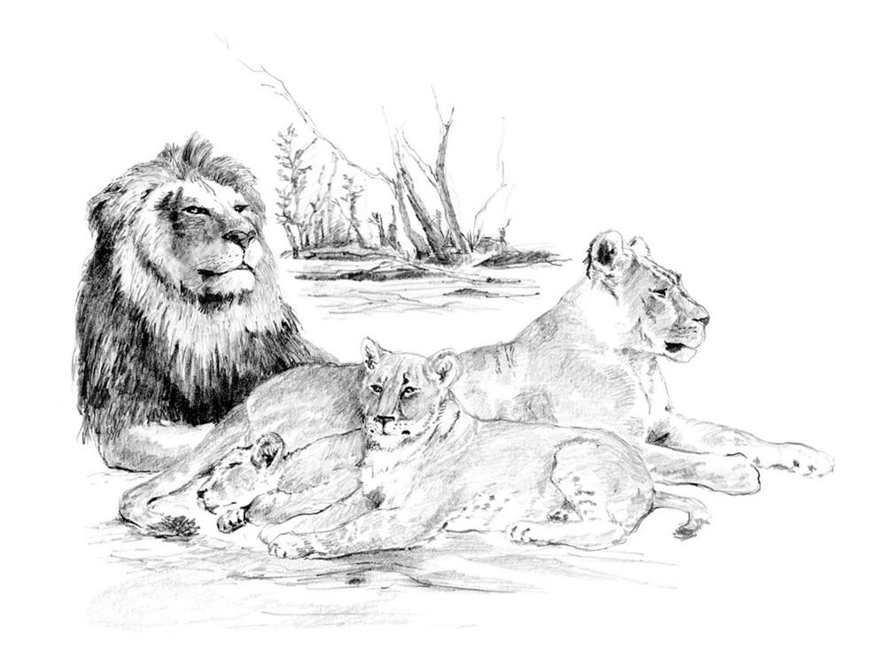 Львица и львята раскраска