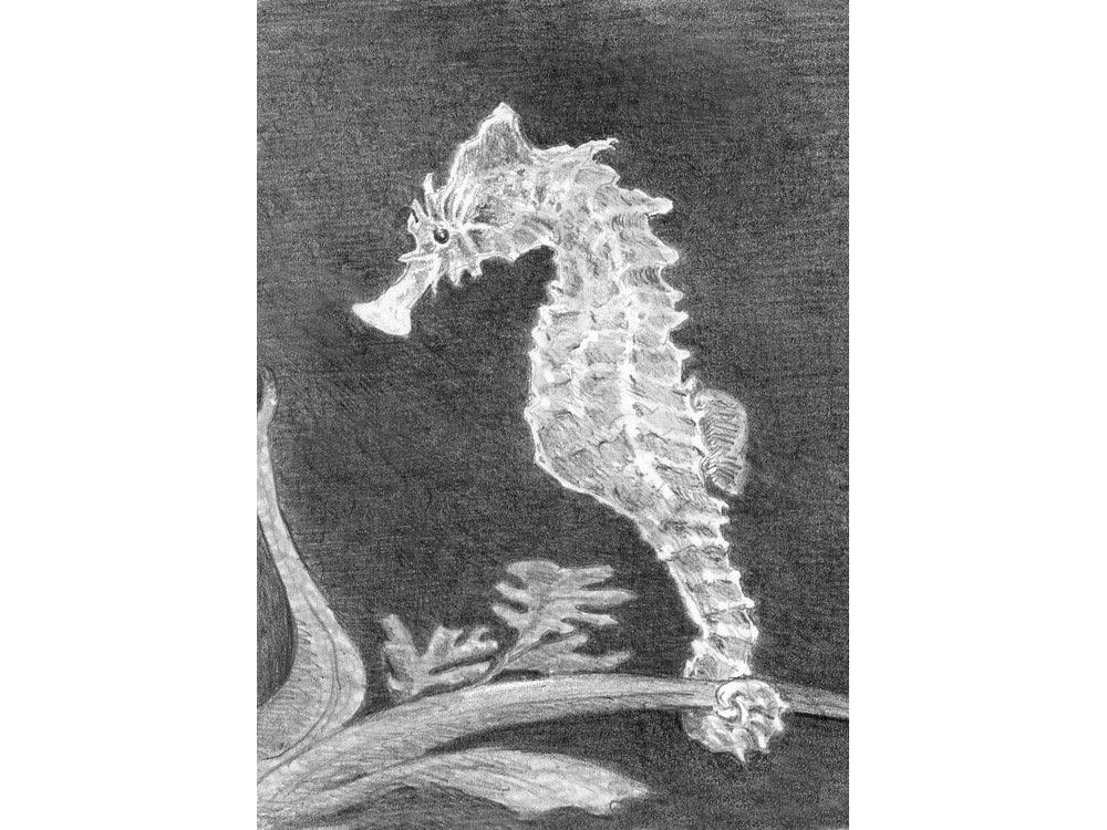 Купить Набор для скетчинга «Морской конек», Royal&Langnickel, 14x20 см, SKMIN103