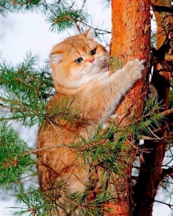 Купить Алмазная вышивка «Кот на дереве», Алмазное Хобби, Россия, 40x50 см, Ah05521