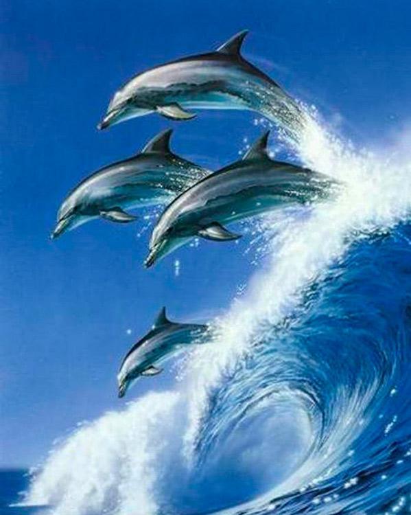 Купить Алмазная вышивка «Дельфины на волне», Алмазное Хобби, Россия, 40x50 см, Ah08001
