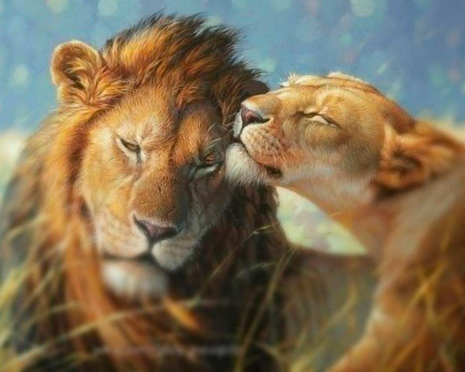 Чувства в картинках с животными любимой, открытка фотографий онлайн