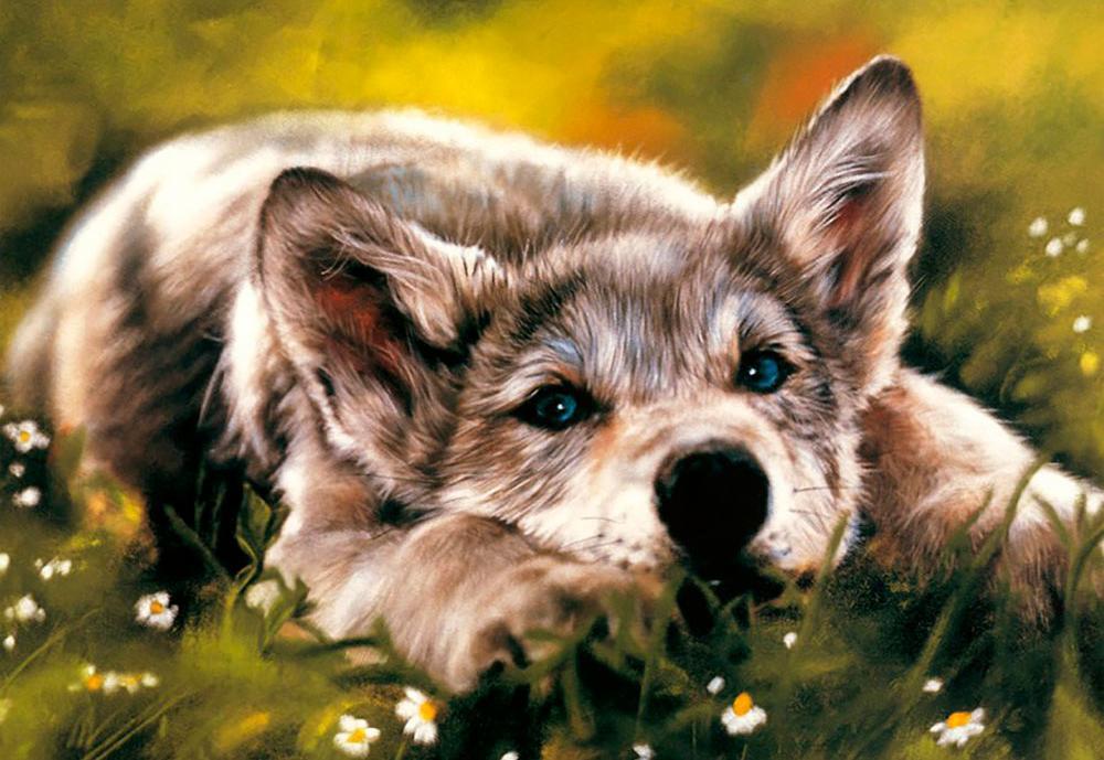 Купить Алмазная вышивка «Волчонок», Алмазное Хобби, Россия, 40x60 см, Ah09231