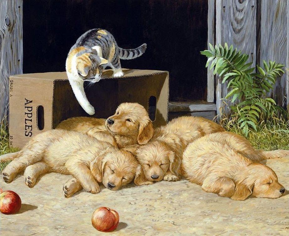 Прикольные картинки с собаками и кошками нарисованные, приглашения въезд иностранного