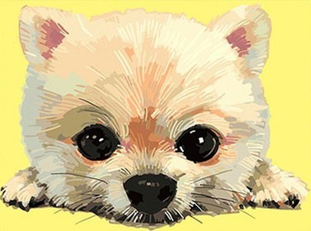 Купить Картина по номерам «Щенок», Paintboy (Premium), 30x40 см, EX5757